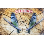 ADESIVO SUPER LUXO PARA GAIOLAS DE PASSEIO / TORNEIO-COLEIRO BAIANO 02