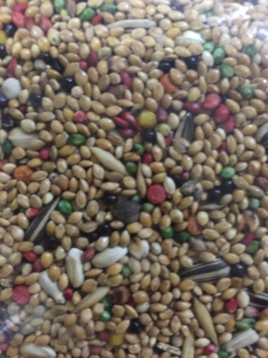 Mistura Belga Especial para Calopsita 500g
