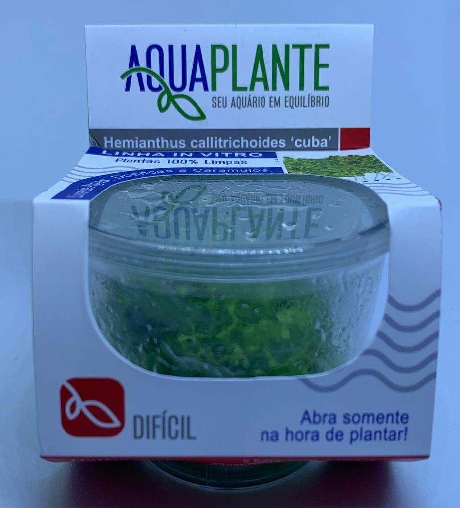 HEMIANTHUS CALLITRICHOIDES cuba 'In vitro planta 100% LIVRE de pragas e algas'