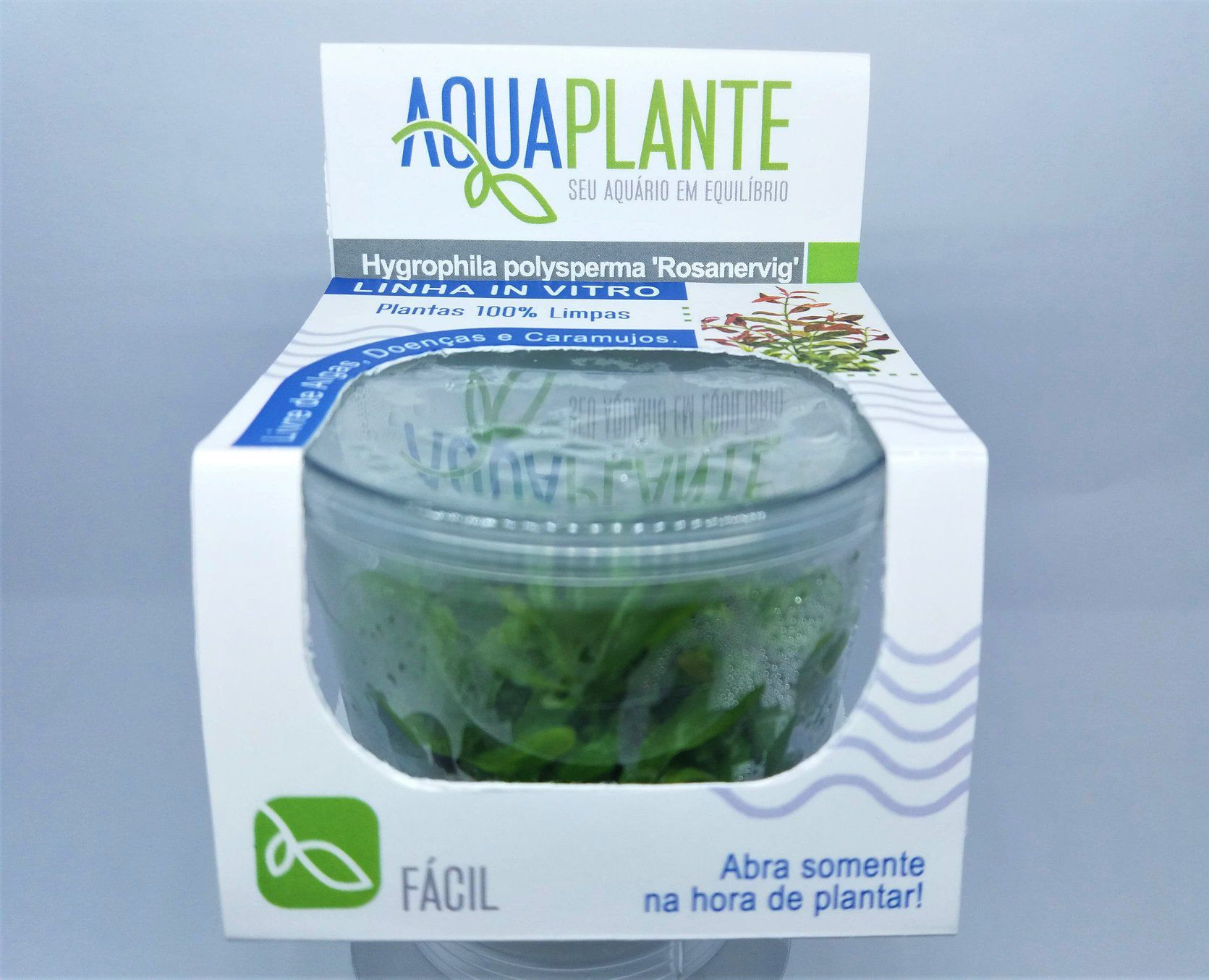 HYGROPHILA POLYSPERMA Rosanervig  'In vitro planta 100% LIVRE de pragas e algas'