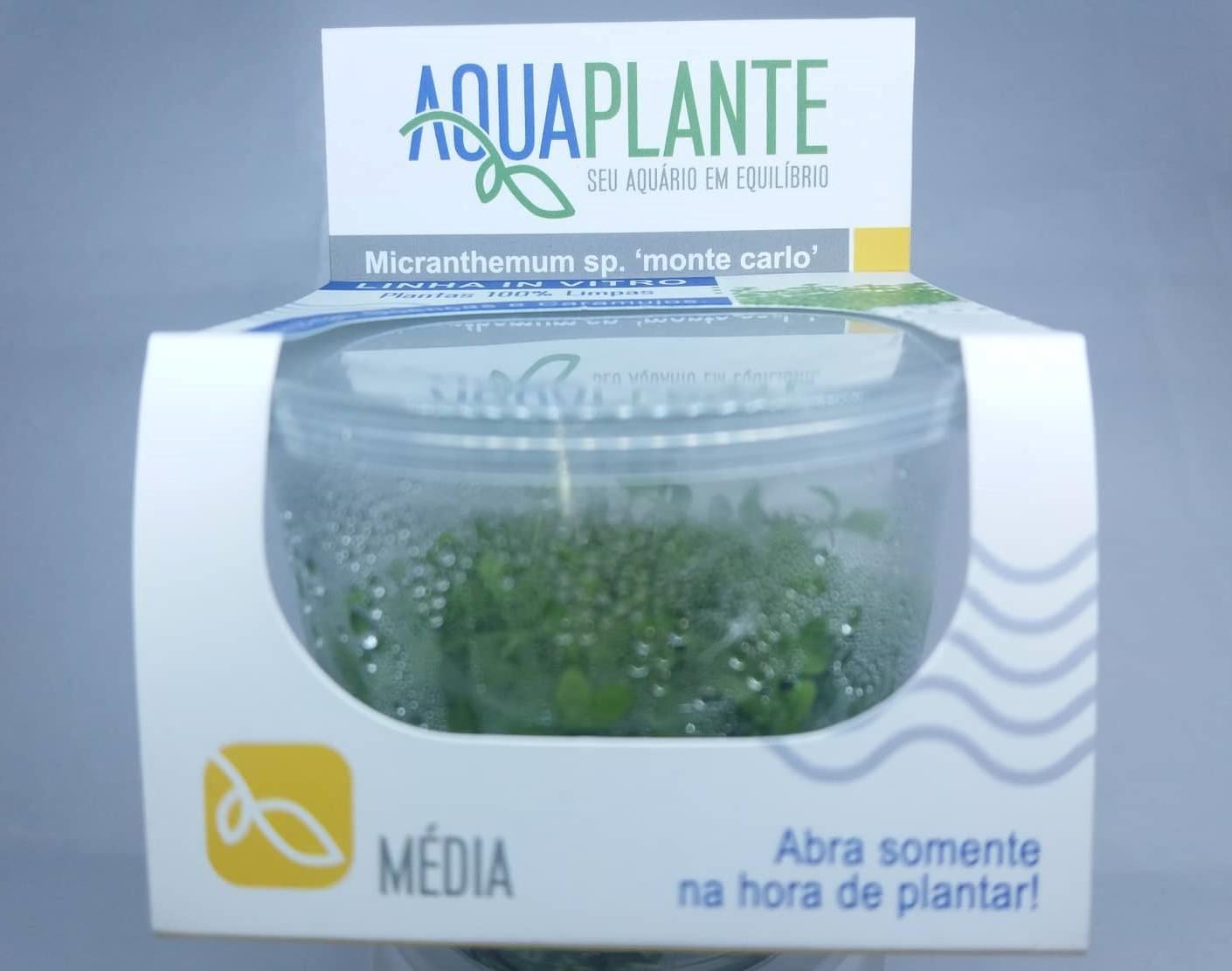 MICRANTHEMUM SP MONTE CARLO  'In vitro planta 100% LIVRE de pragas e algas'