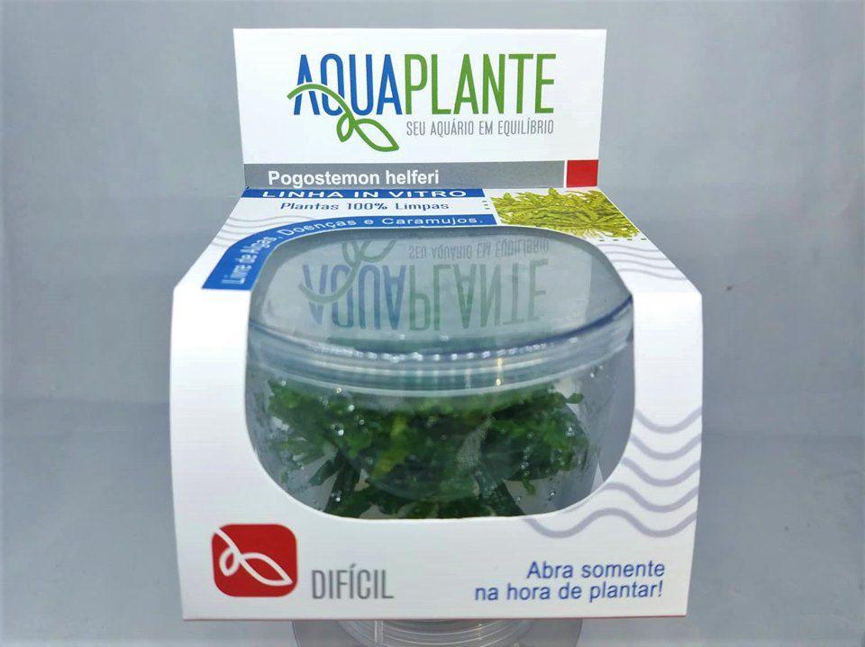 POGOSTEMON HELFERI 'In vitro planta 100% LIVRE de pragas e algas'