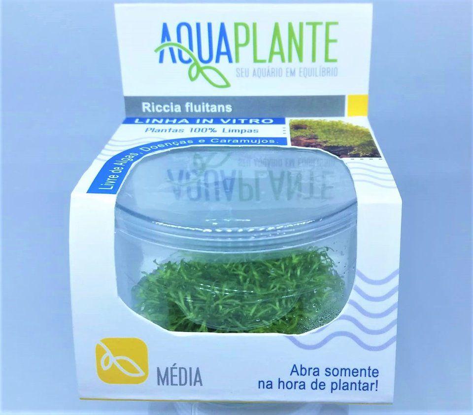 RICCIA FLUITANS 'In vitro planta 100% Livre de pragas e algas'