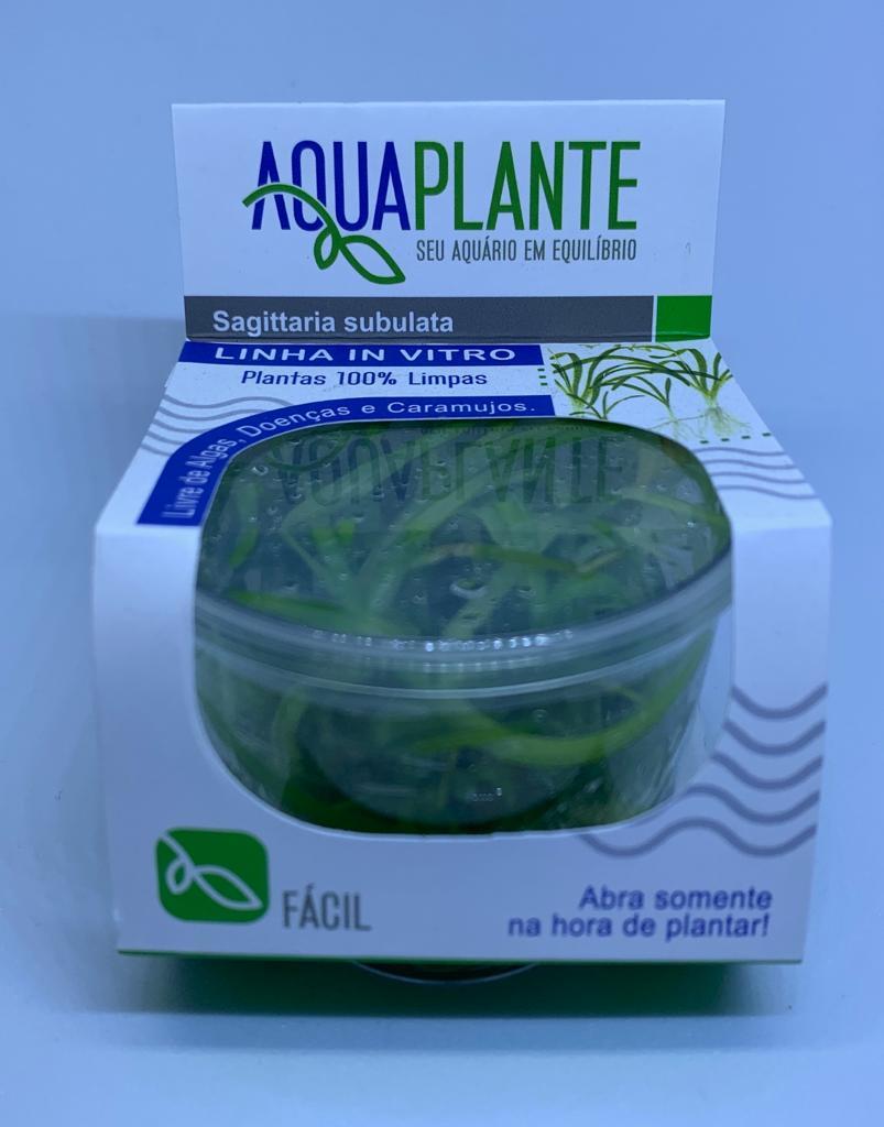 SAGITTARIA SUBULATA 'In vitro planta 100% Livre de pragas e algas'