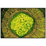 Quadro decorativo Abstrato em canvas - AGAB025