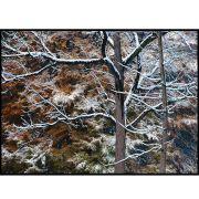 Quadro decorativo Árvores em canvas - AGAR003