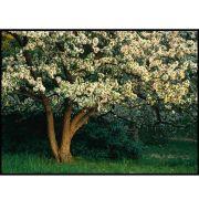 Quadro decorativo Árvores em canvas - AGAR009