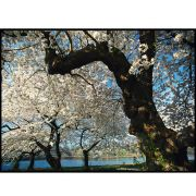 Quadro decorativo Árvores em canvas - AGAR010