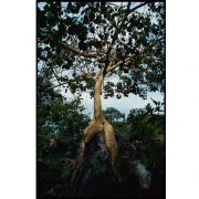 Quadro decorativo Árvores em canvas - AGAR030