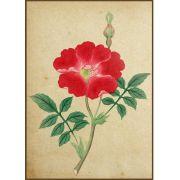 Quadro decorativo Flores em canvas - AGFL004