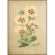 Quadro decorativo Flores em canvas - AGFL029