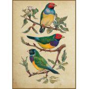 Quadro decorativo pássaro em canvas - AGPS002