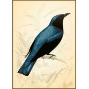 Quadro decorativo pássaro em canvas - AGPS011
