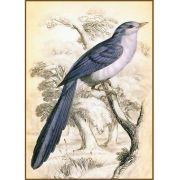 Quadro decorativo pássaro em canvas - AGPS016