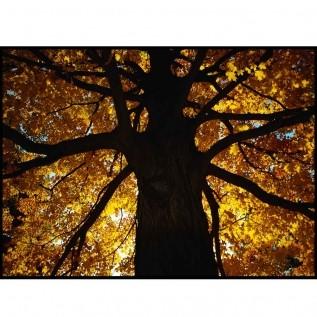 Quadro decorativo Árvores em canvas - AGAR017