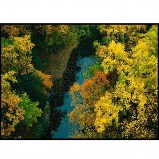 Quadro decorativo Árvores em canvas - AGAR020