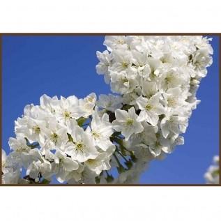 Quadro decorativo Flores em canvas - AGFL039