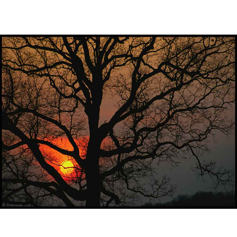 Quadro decorativo Árvores em canvas - AGAR004