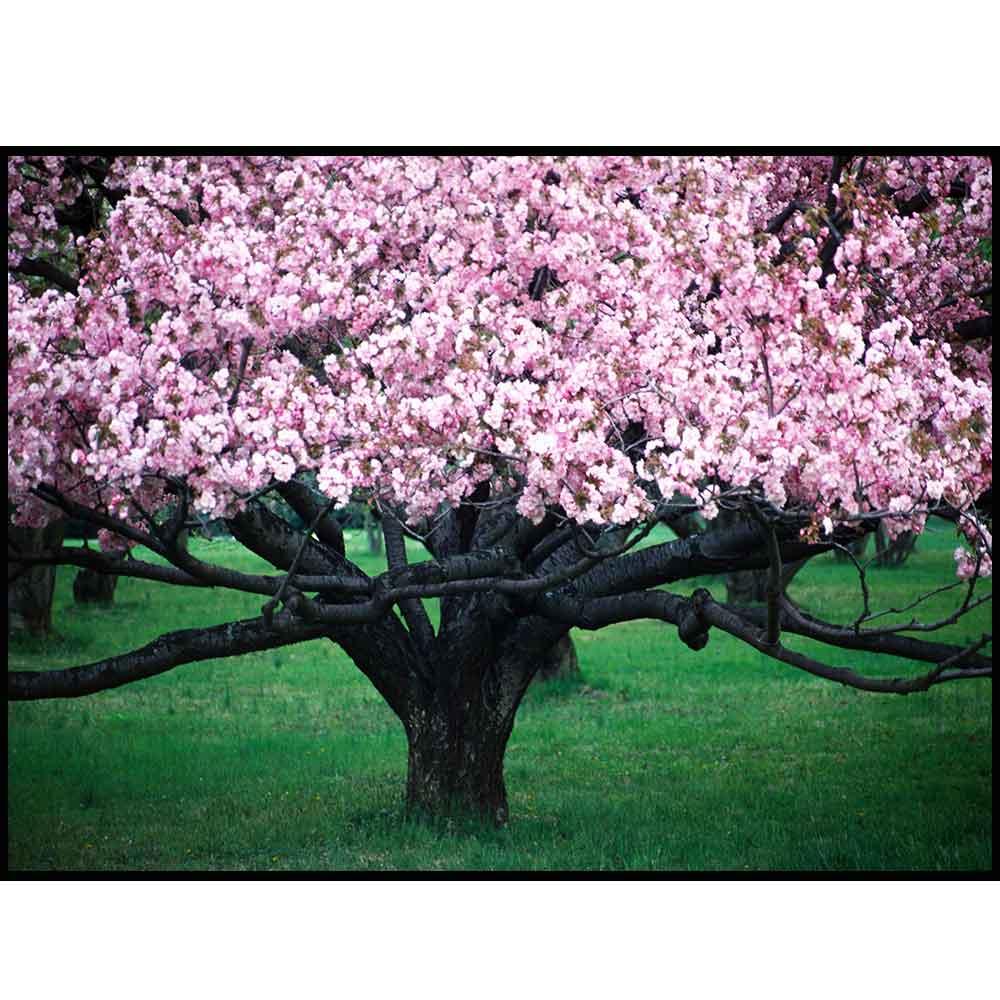 Quadro decorativo Árvores em canvas - AGAR007