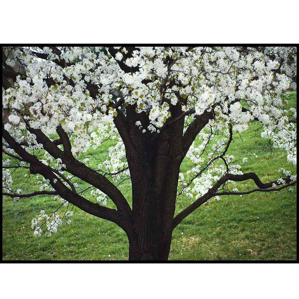 Quadro decorativo Árvores em canvas - AGAR011