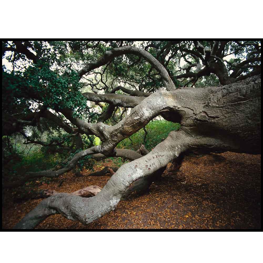 Quadro decorativo Árvores em canvas - AGAR013