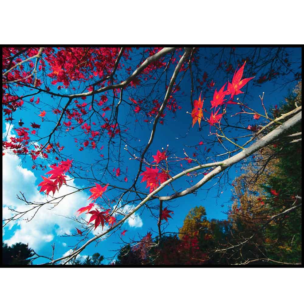 Quadro decorativo Árvores em canvas - AGAR014
