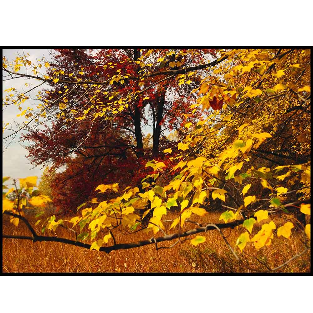 Quadro decorativo Árvores em canvas - AGAR023
