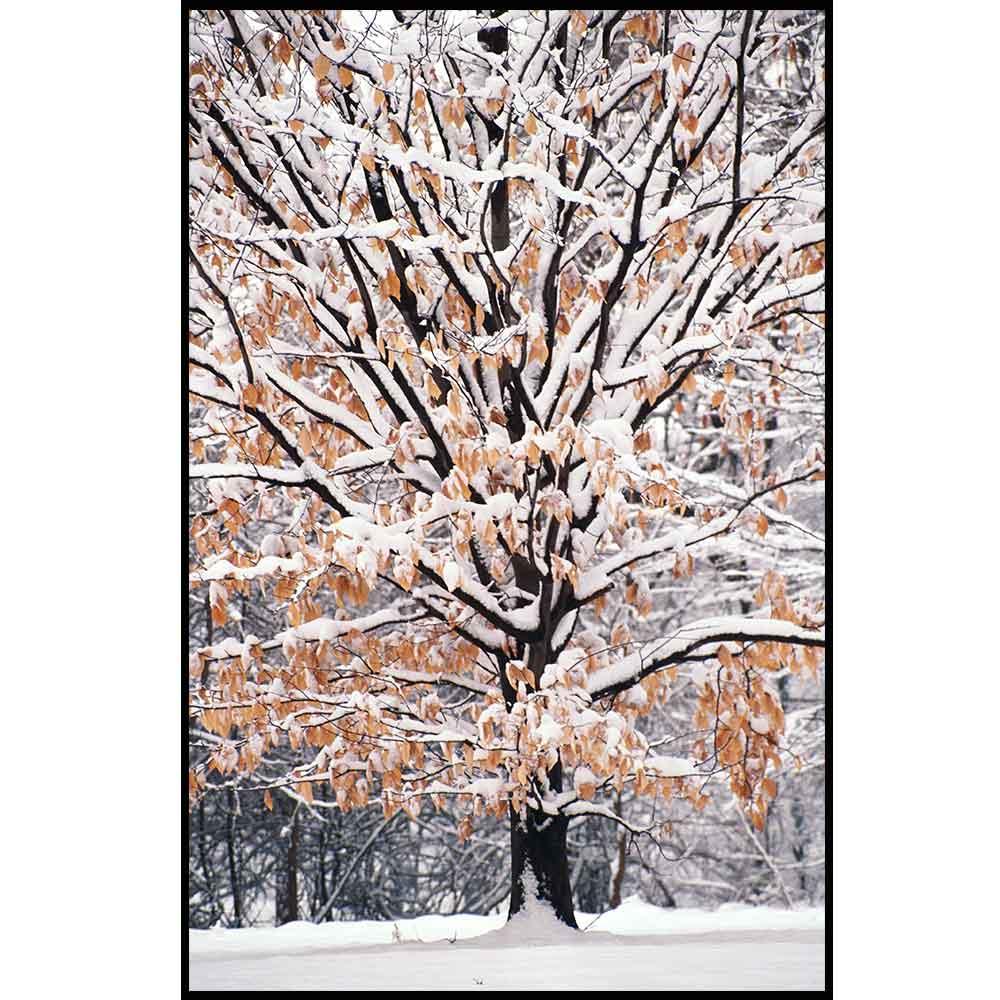Quadro decorativo Árvores em canvas - AGAR028