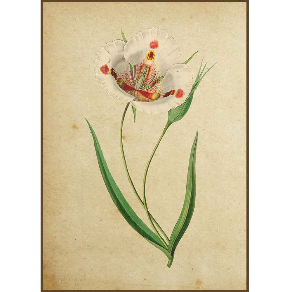 Quadro decorativo Flores em canvas - AGFL011