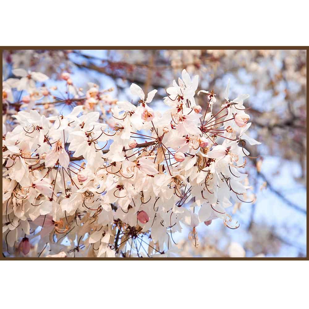 Quadro decorativo Flores em canvas - AGFL030