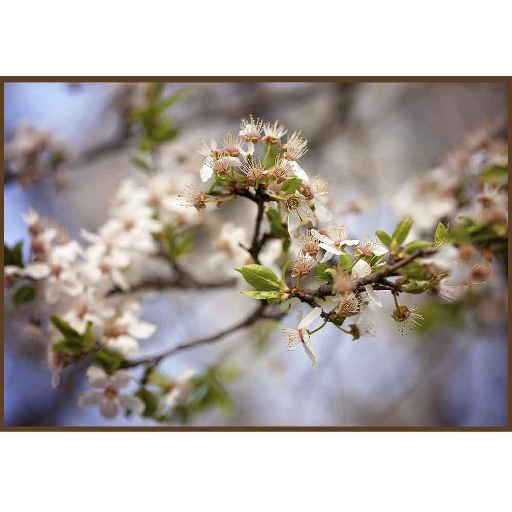 Quadro decorativo Flores em canvas - AGFL036