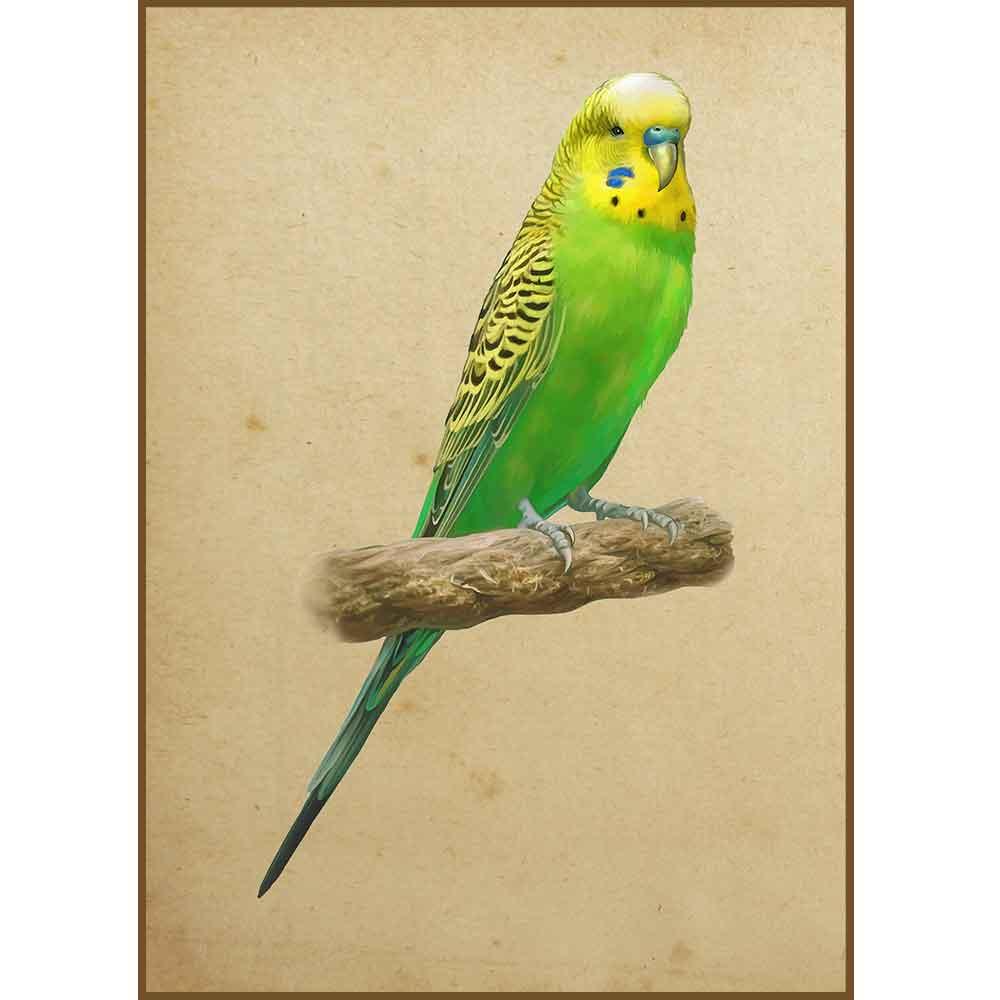 Quadro decorativo pássaro em canvas - AGPS005