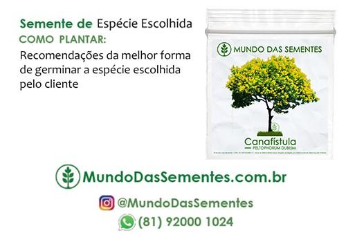 Brindes Ecológicos com Sementes - com Cartão (7x10 cm) Personalizado - Mundo das Sementes