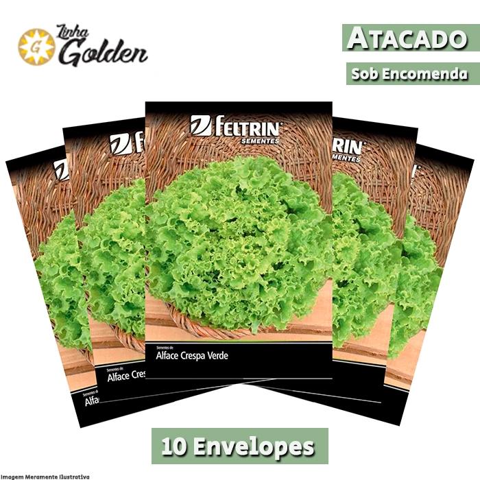 10 Envelopes - Sementes de Alface Crespa Mônica - Atacado - Feltrin - Linha Golden