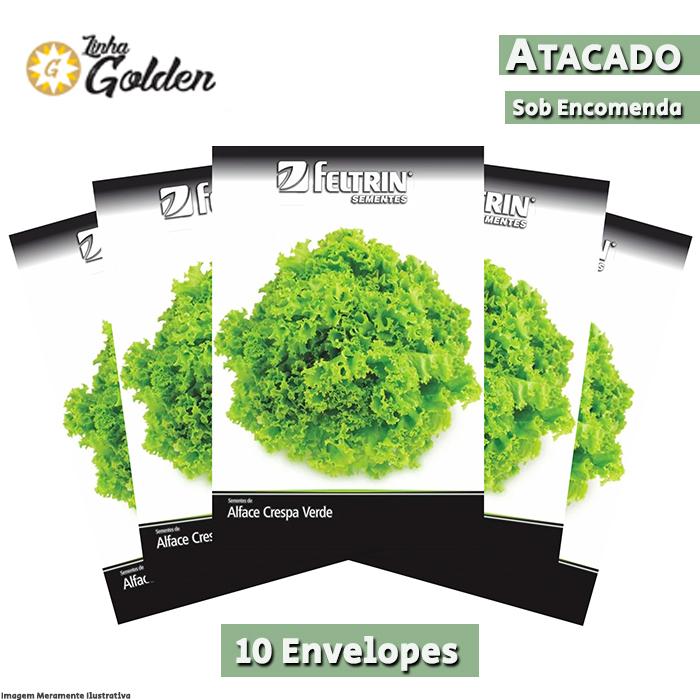 10 Envelopes - Sementes de Alface Grand Rapids - Atacado - Feltrin - Linha Golden