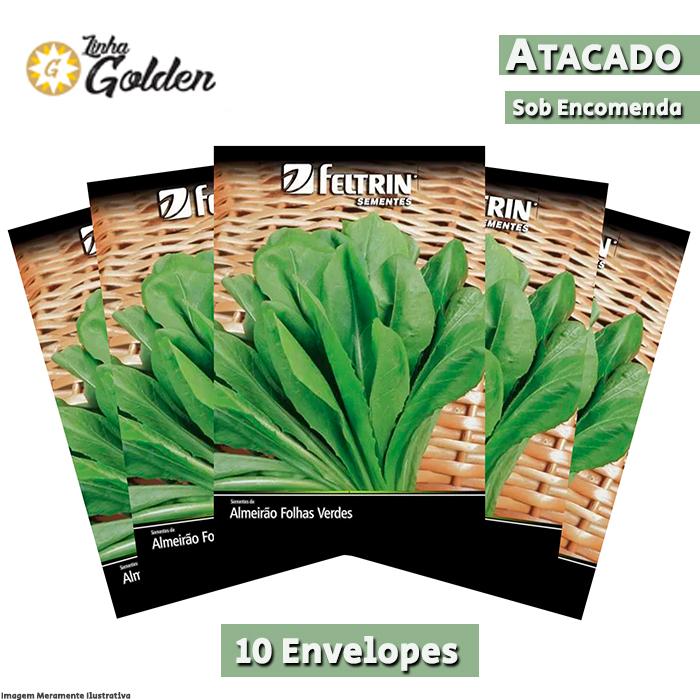 10 Envelopes - Sementes de Almeirão Spadona - Atacado - Feltrin - Linha Golden