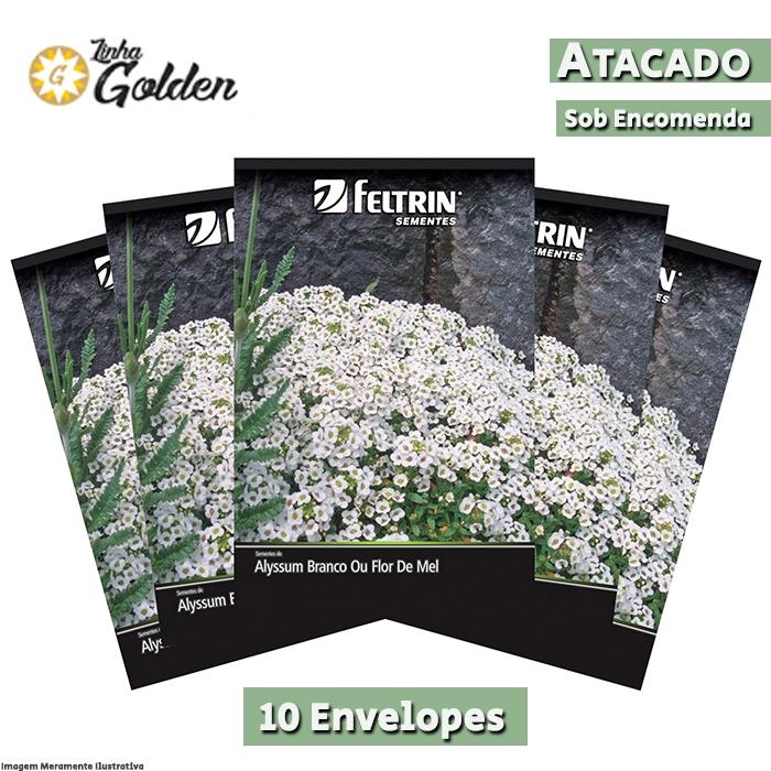 10 Envelopes - Sementes de Flor-de-mel - Alyssum Benthami - Atacado - Feltrin - Linha Golden