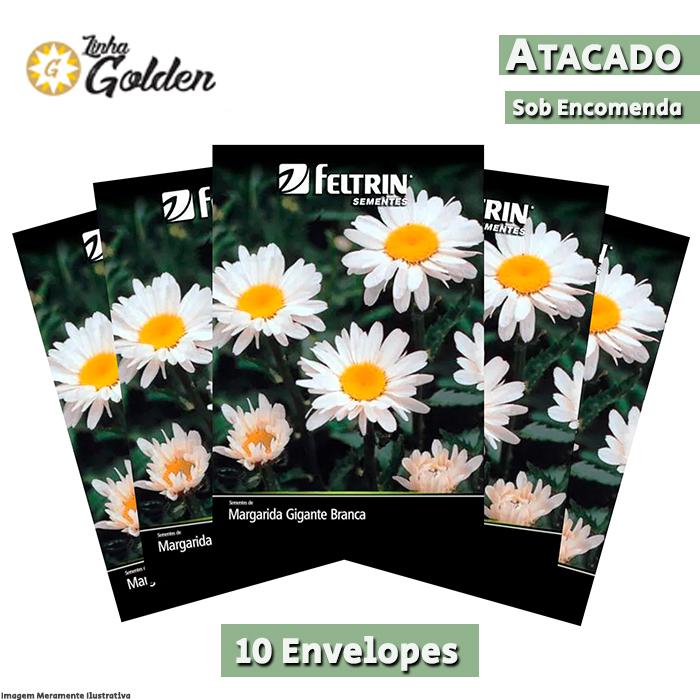 10 Envelopes - Sementes de Margarida Gigante Branca - Atacado - Feltrin - Linha Golden