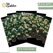 10 Envelopes - Sementes de Camomila ou Maçanilha - Atacado - Feltrin - Linha Golden