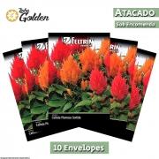 10 Envelopes - Sementes de Celósia Plumosa Sortida - Atacado - Feltrin - Linha Golden
