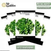 10 Envelopes - Sementes de Chicória Gigante Barbarella - Atacado - Feltrin - Linha Golden