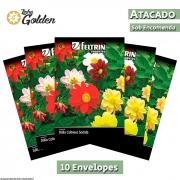 10 Envelopes - Sementes de Dália Coltness Sortida - Atacado - Feltrin - Linha Golden