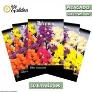 10 Envelopes - Sementes de Estátice Sinuata Sortida - Atacado - Feltrin - Linha Golden