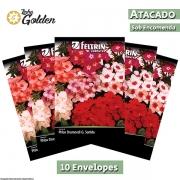 10 Envelopes - Sementes de Phlox Sortido Ou Chitinha - Atacado - Feltrin - Linha Golden