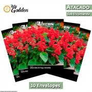 10 Envelopes - Sementes de Sálvia Bola de Fogo Vermelha ou Alegria  de Jardim - Atacado - Feltrin - Linha Golden