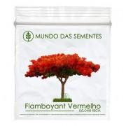 Brindes Ecológicos com Sementes de Flamboyant Vermelho - Delonix regia - Mundo das Sementes