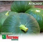 Sementes de Abobrinha Tronco Redonda Verde - Atacado - Feltrin