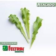 Sementes de Almeirão Crespo Toscano - Atacado - Feltrin