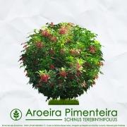 Sementes de Aroeira Pimenteira / Pimenta Rosa (Arbusto) - Schinus terebinthifolius - Mundo das Sementes