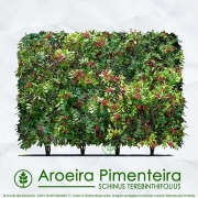 Sementes de Aroeira Pimenteira / Pimenta Rosa (Cerca Viva) - Schinus terebinthifolius - Mundo das Sementes
